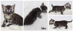 Taka 4 weeks