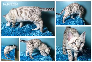 Babylon 13 weeks.jpg