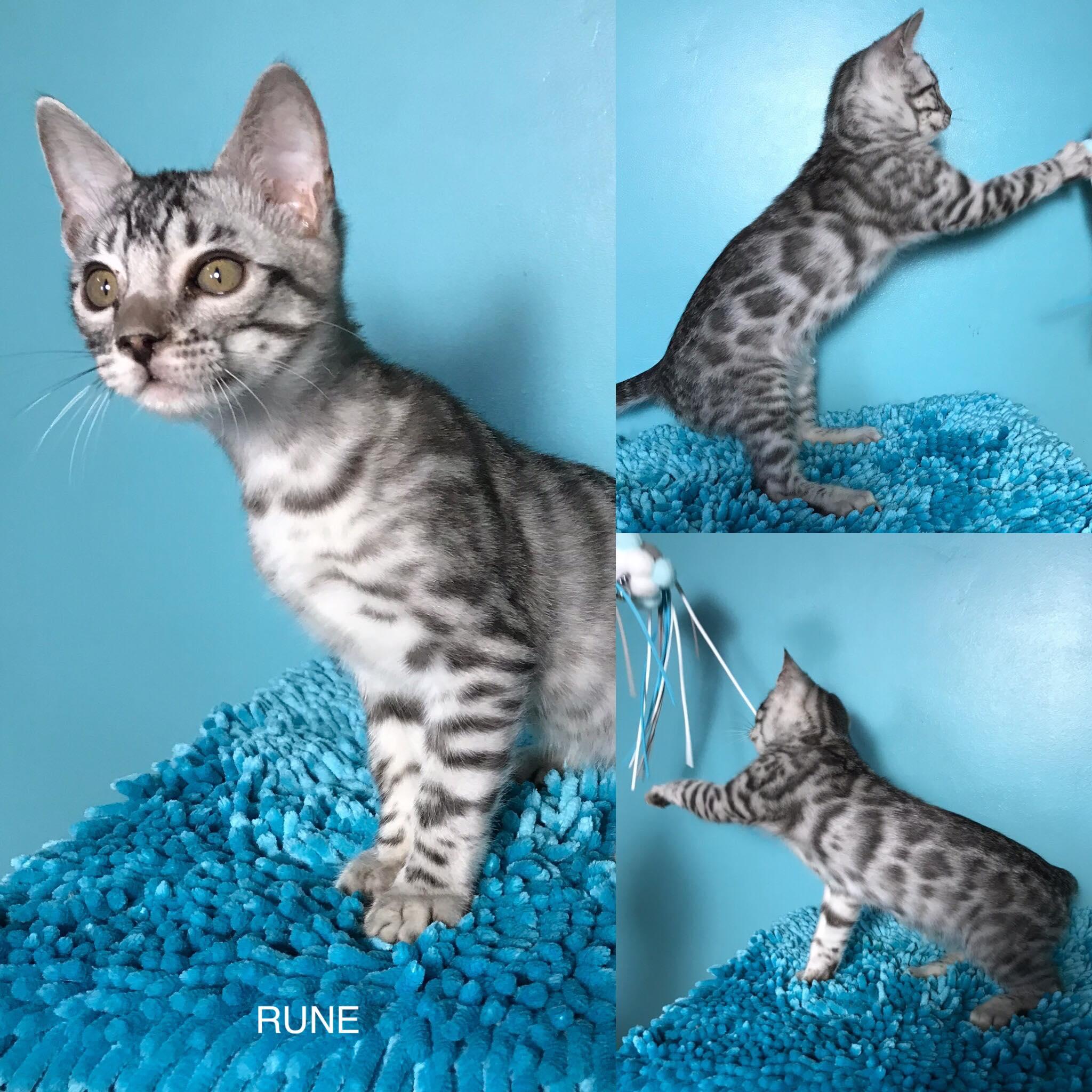 Rune 11 weeks