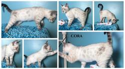 Cora 16 weeks