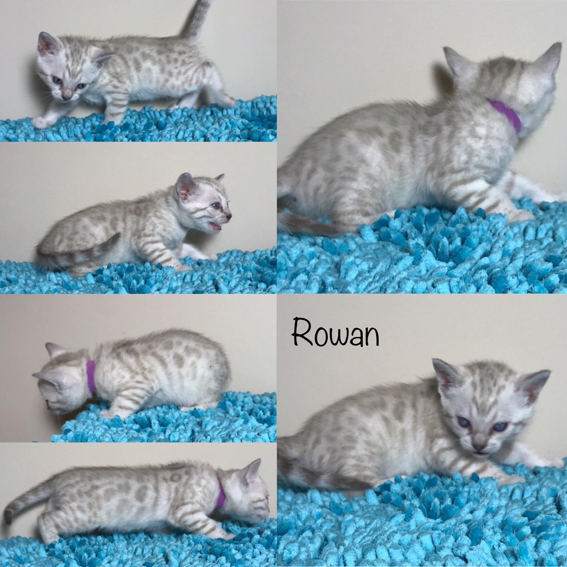 Rowan 4 weeks