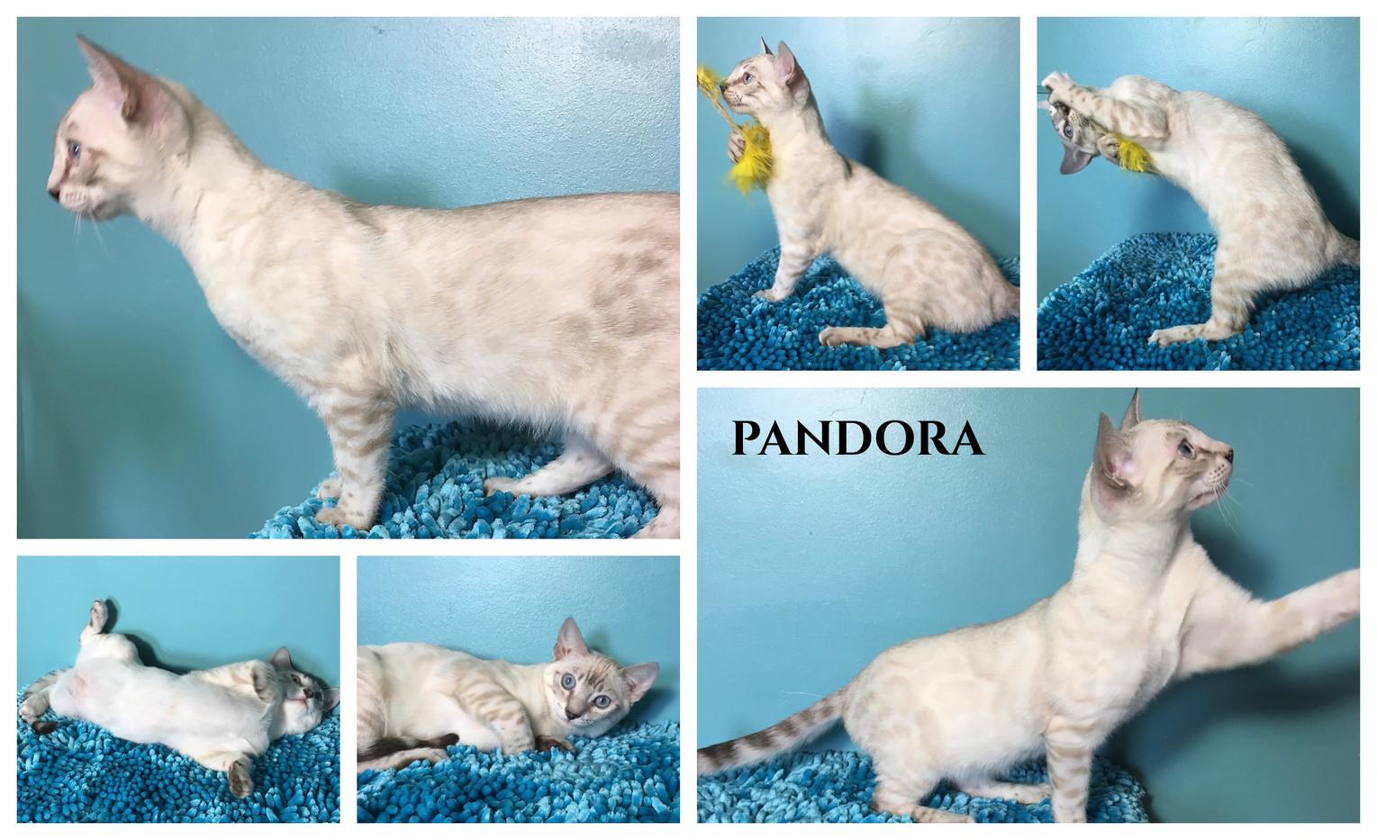 Pandora 18 weeks.jpg
