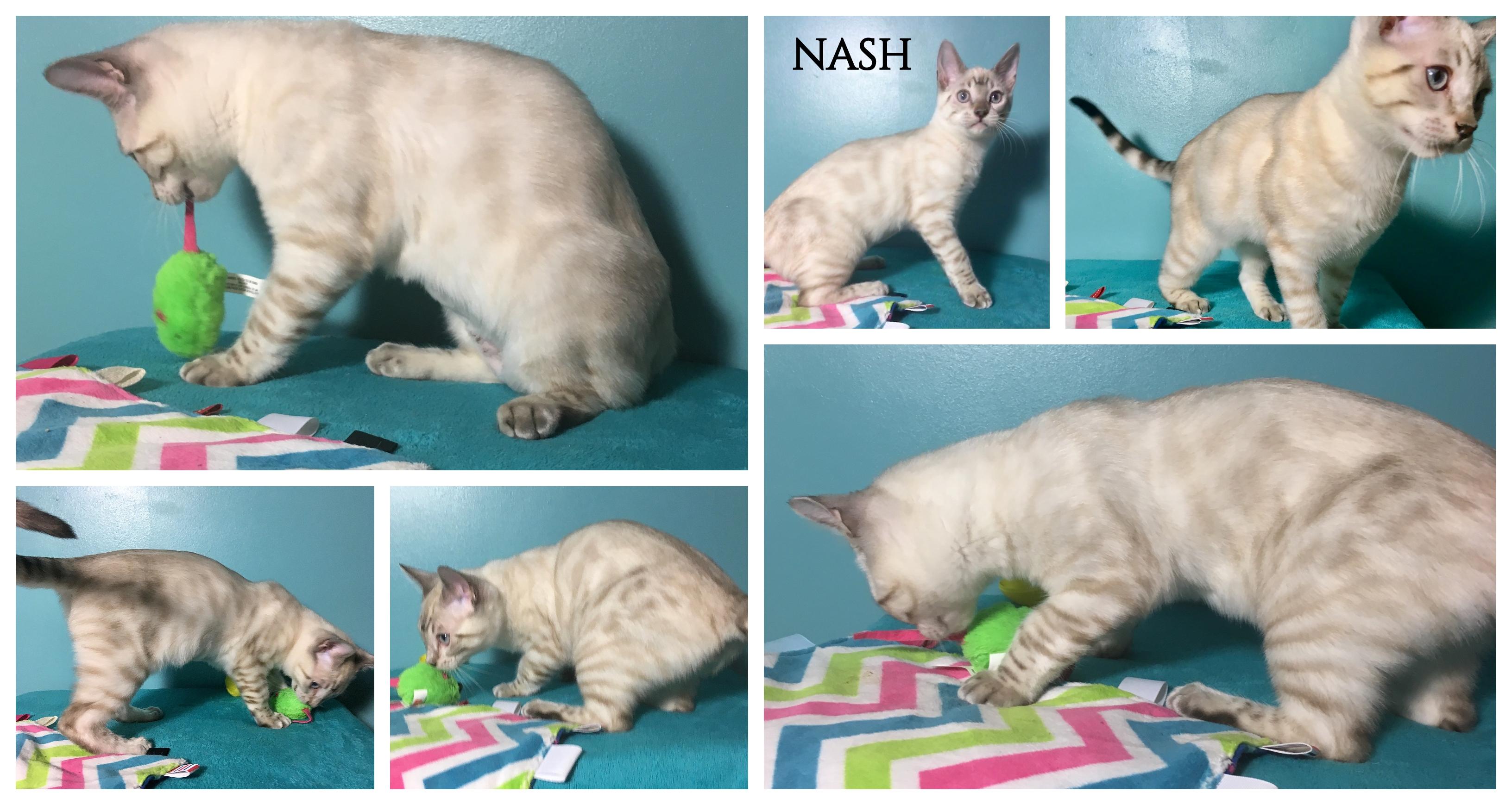 Nash 16 weeks