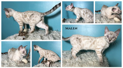 Malen 13 weeks