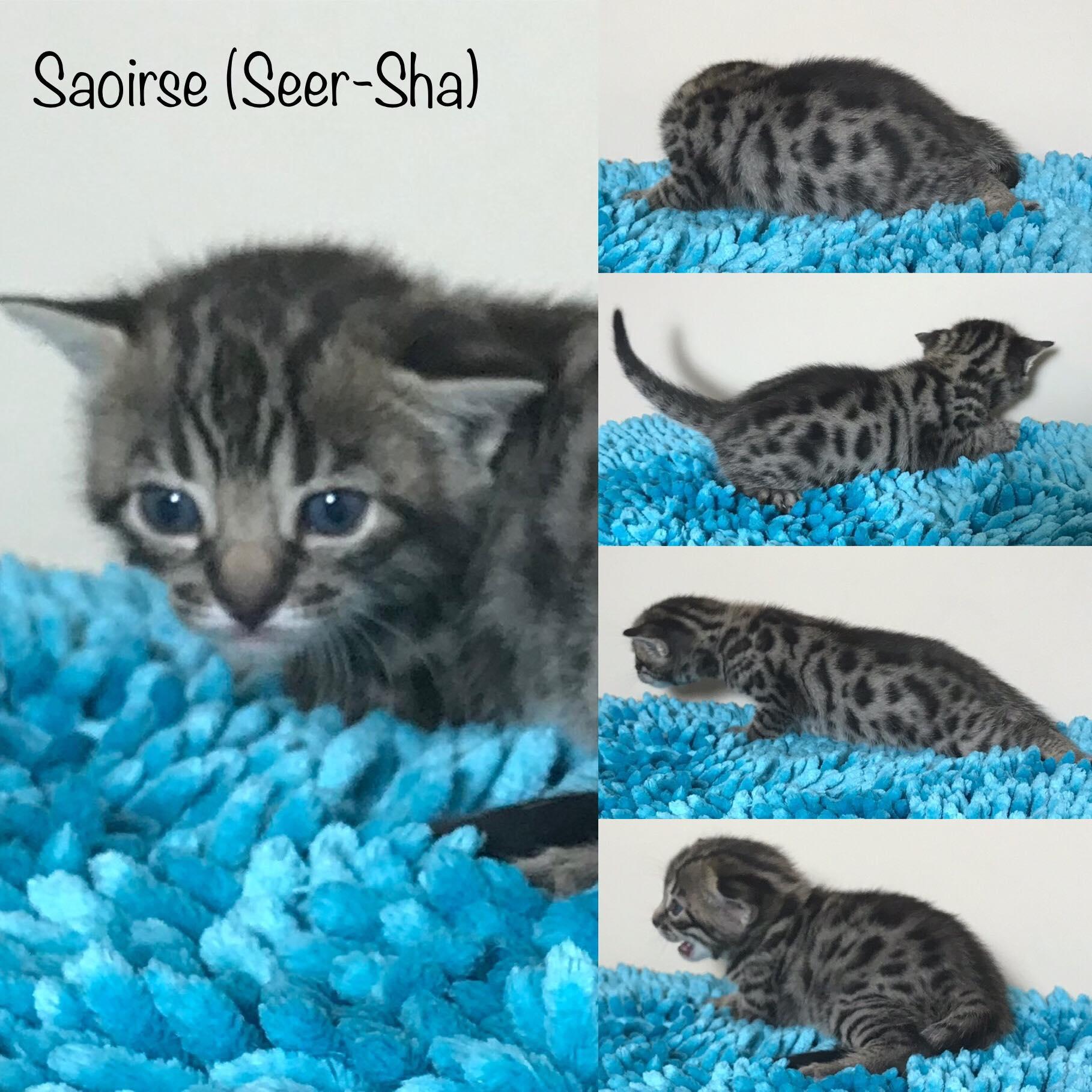 Saoirse 3 weeks