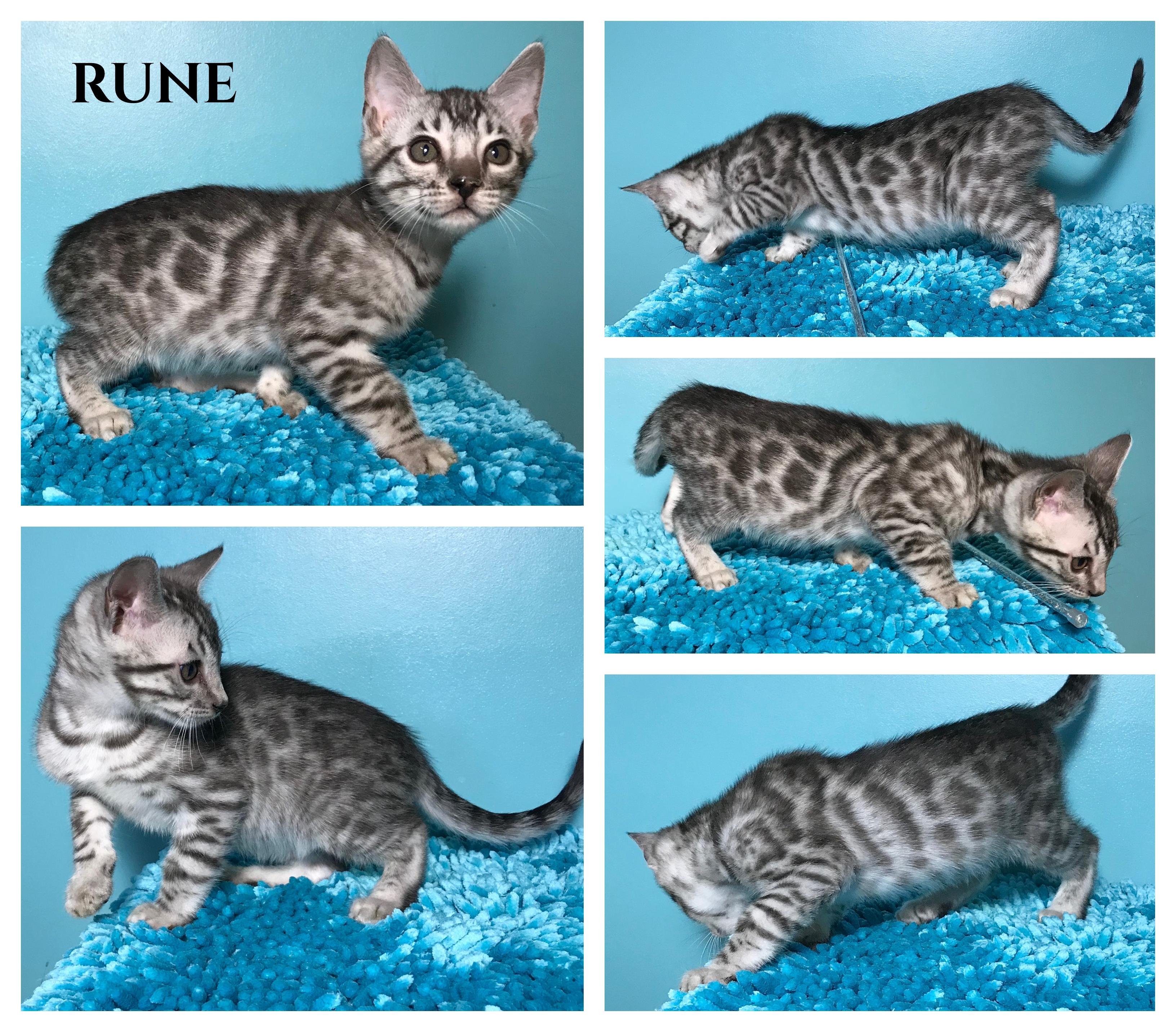 Rune 9 weeks
