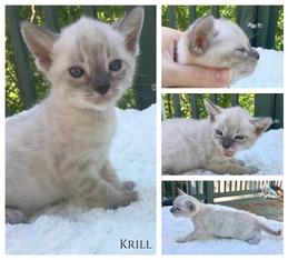 Krill 4 weeks.jpg
