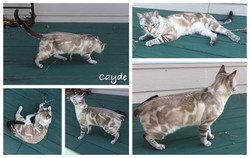 Cayde 8 months