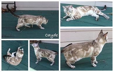 Cayde 8 months.jpg