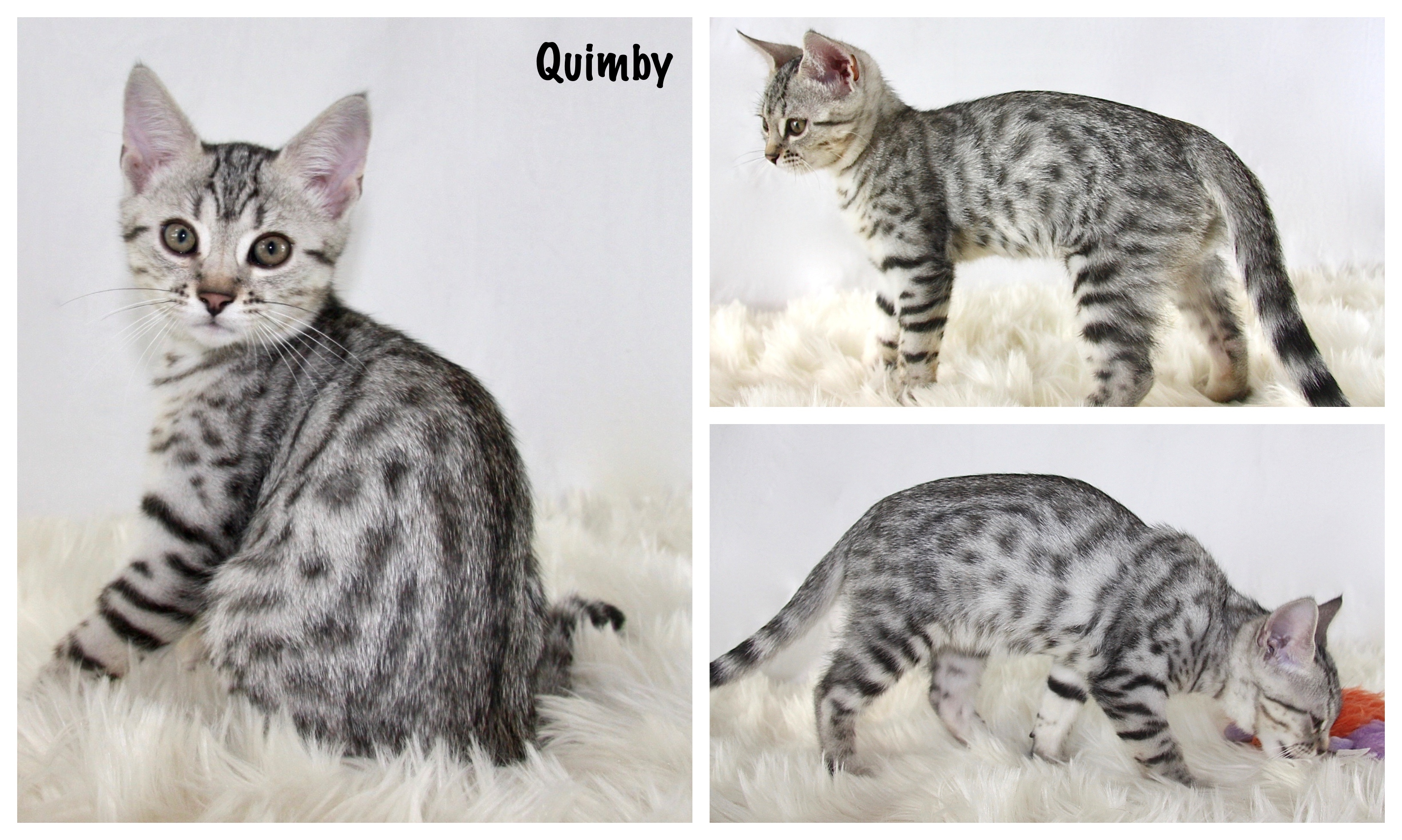 Quimby 12 weeks