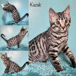 Kazak 13 weeks