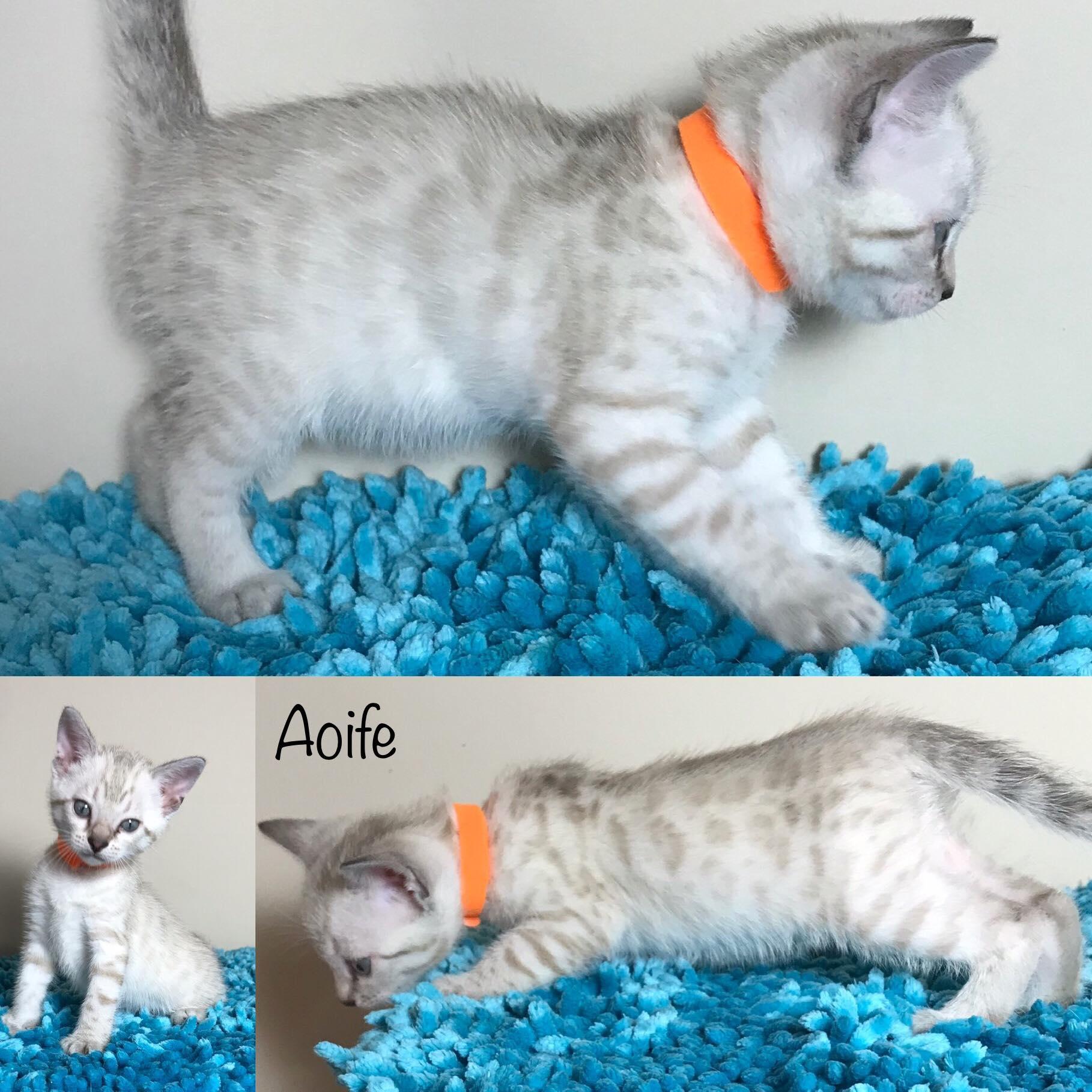Aoife 5 weeks