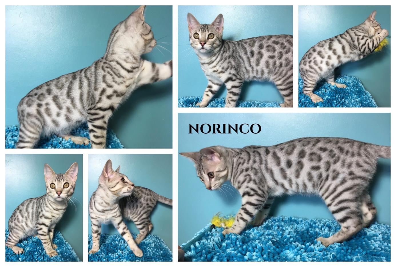 Norinco 22 weeks.jpg