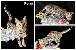 Bregan 12 weeks