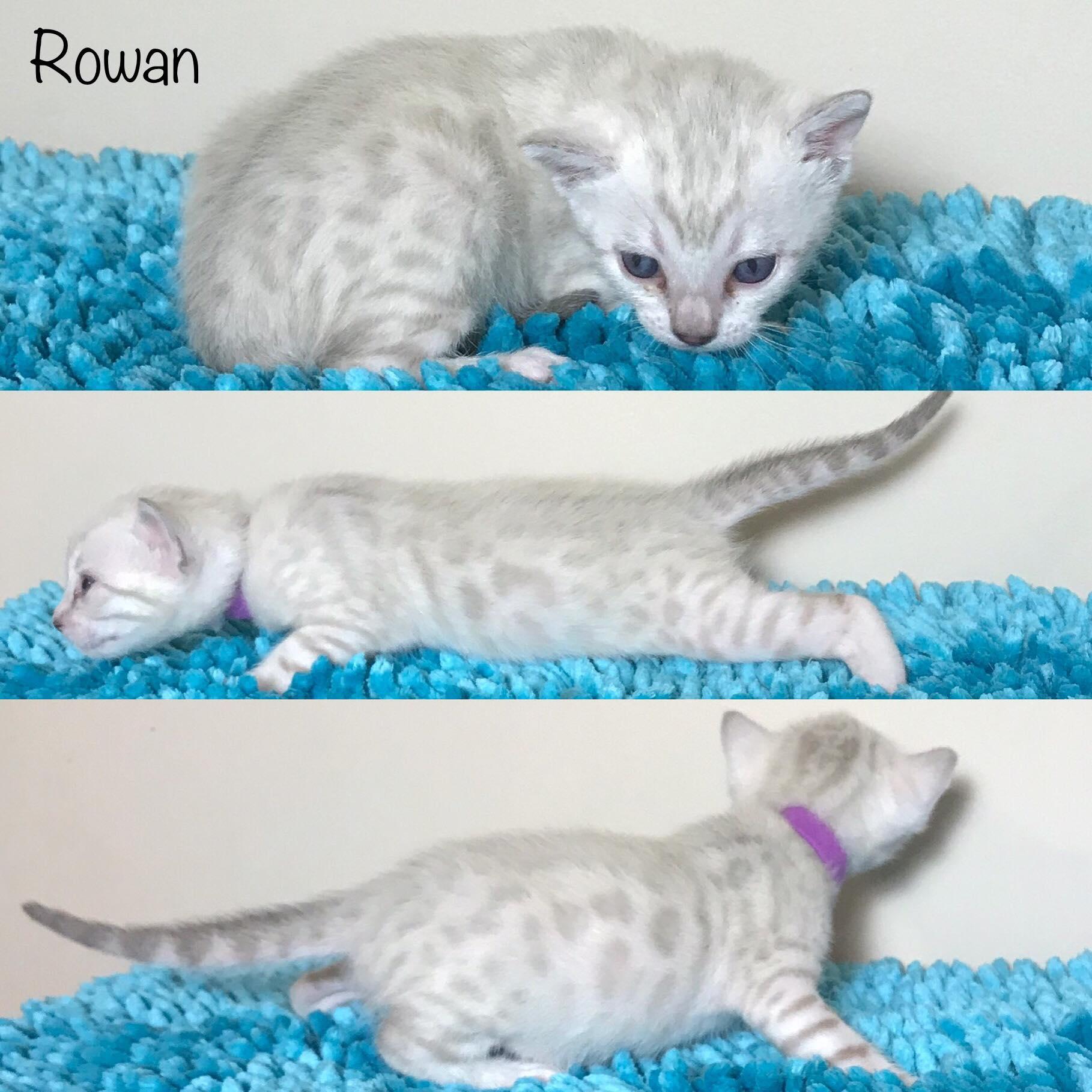 Rowan 3 weeks