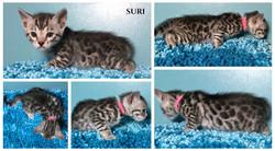 Suri 5 weeks