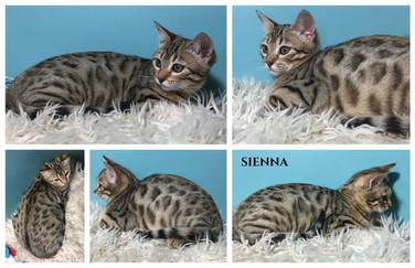 Sienna 15 weeks.jpg