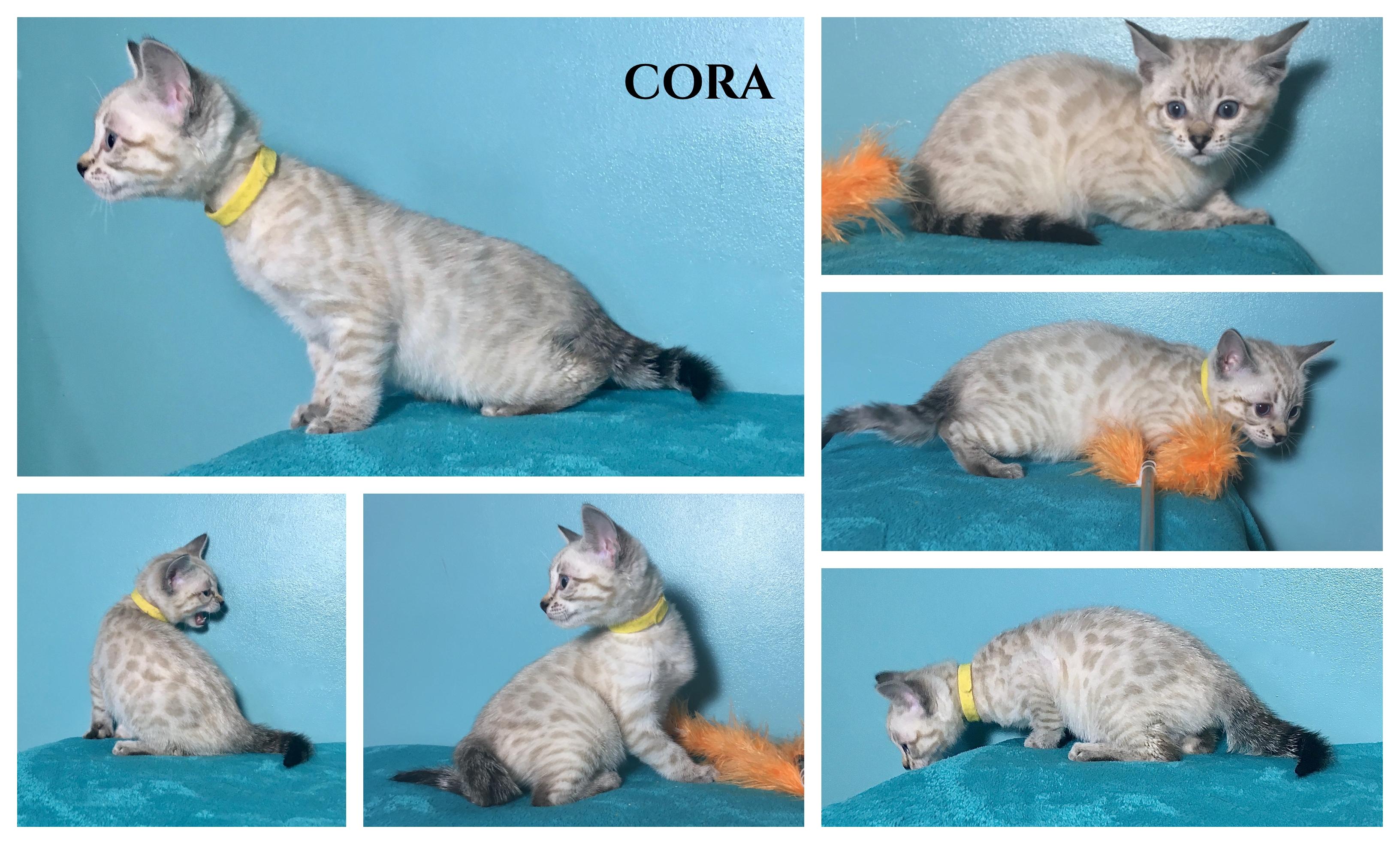Cora 8 weeks