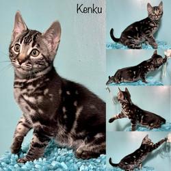 Kenku 11 weeks