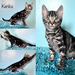 Kenku 13 weeks