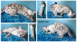 Babylon aka Vignette