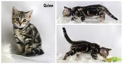 Quinn 7 weeks