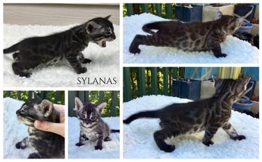 Sylanas 4 weeks.jpg