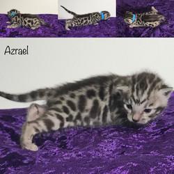 Azrael 2 weeks