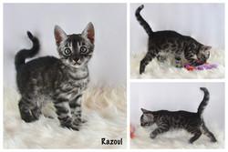 Razoul 7 weeks