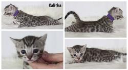 Calitha 4 weeks