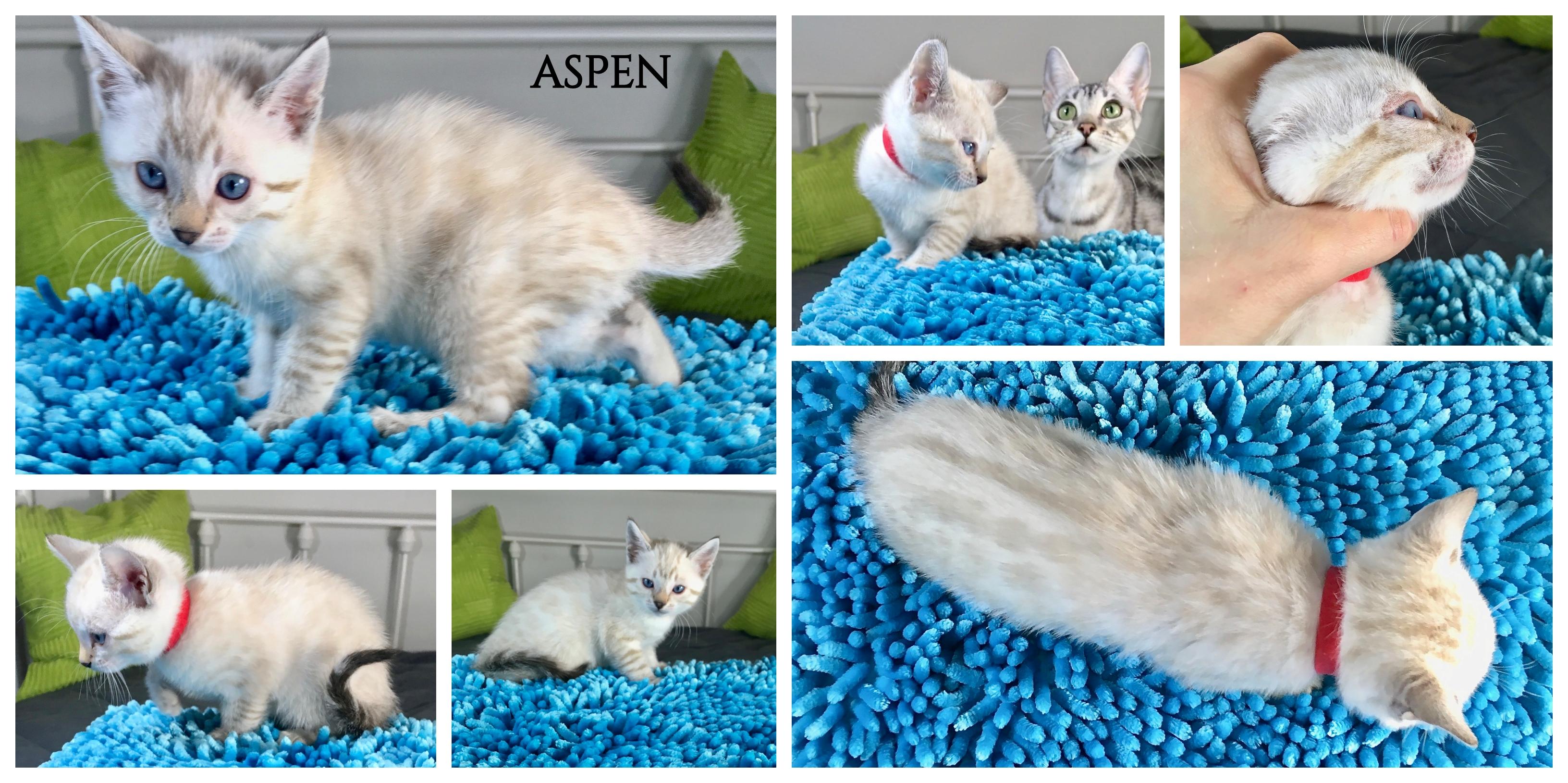 Aspen 6 weeks
