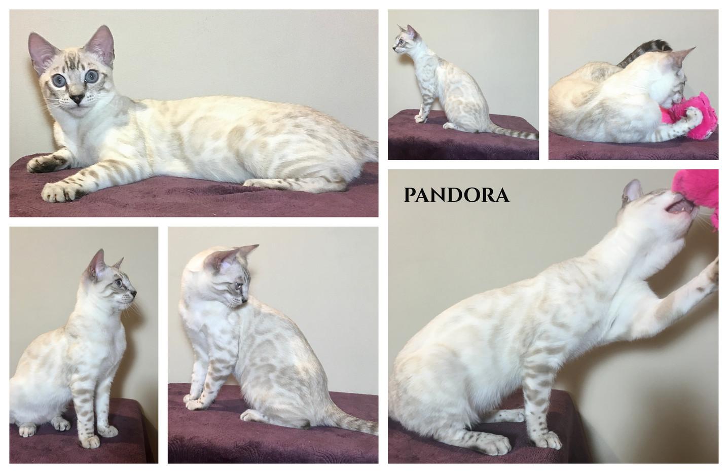 Pandora 24 weeks.jpg