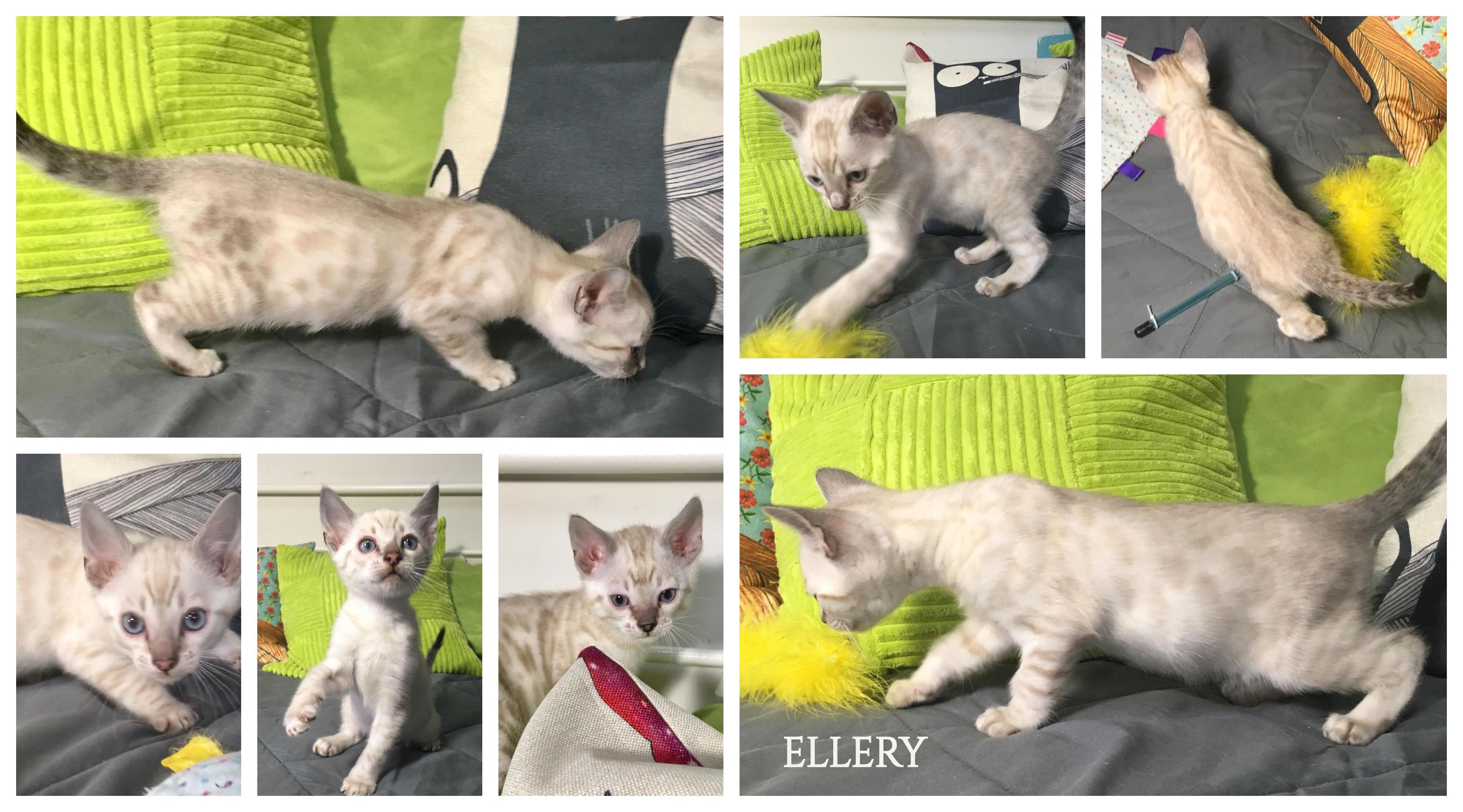 Ellery 8 weeks