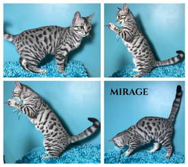 Mirage 19 weeks.jpg