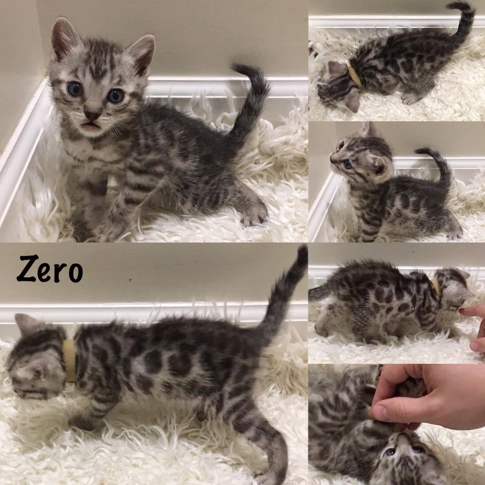 Zero 6 weeks