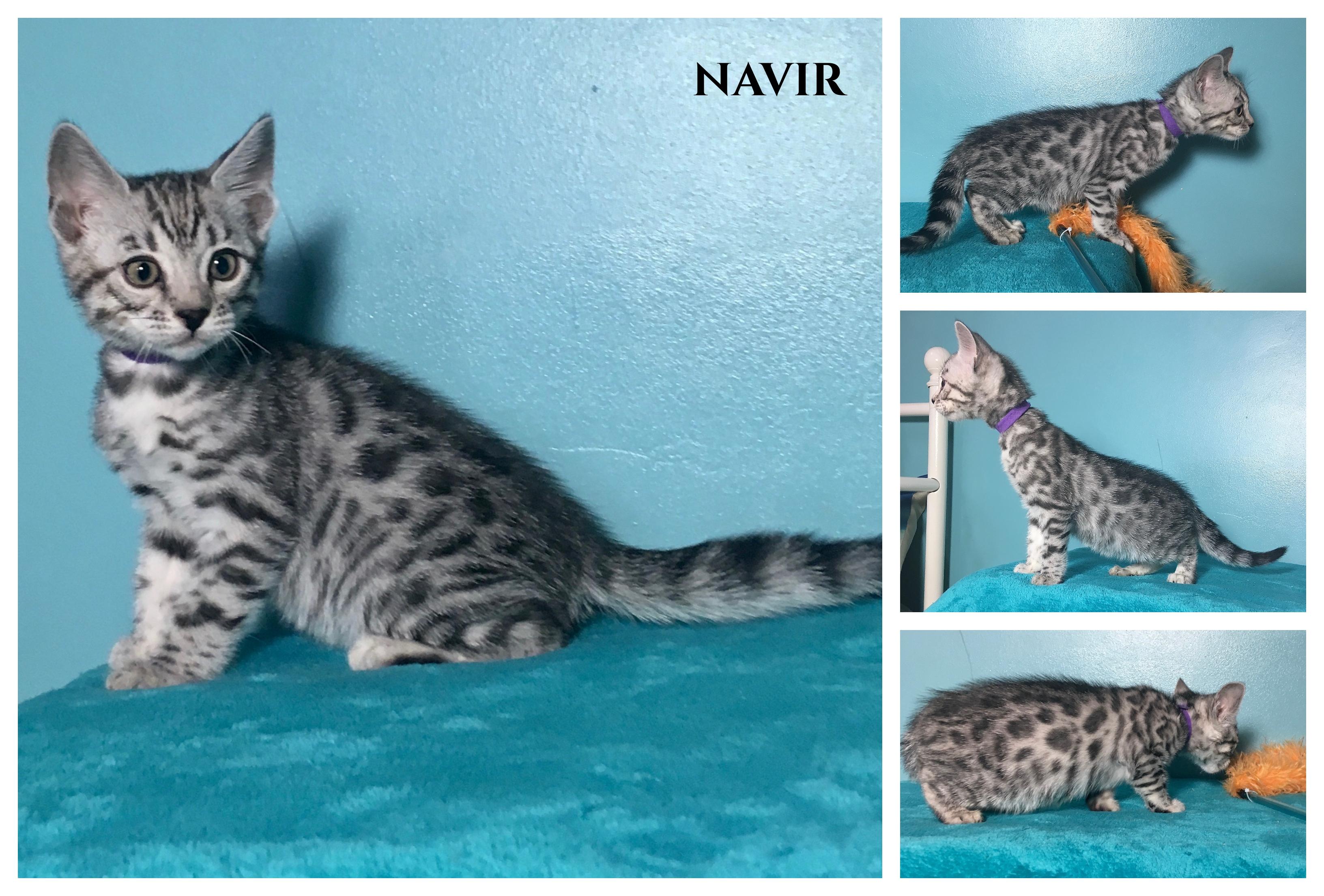 Navir 8 weeks