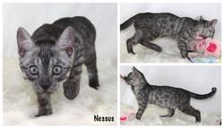 Nessus 10 weeks
