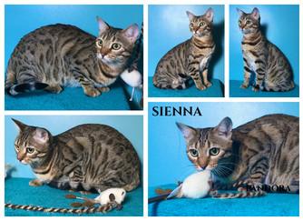 Sienna 10 months.jpg
