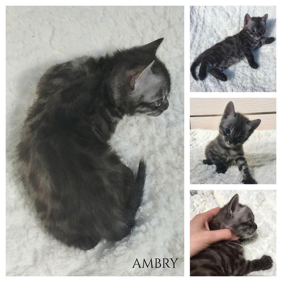 Ambry 4 weeks.jpg