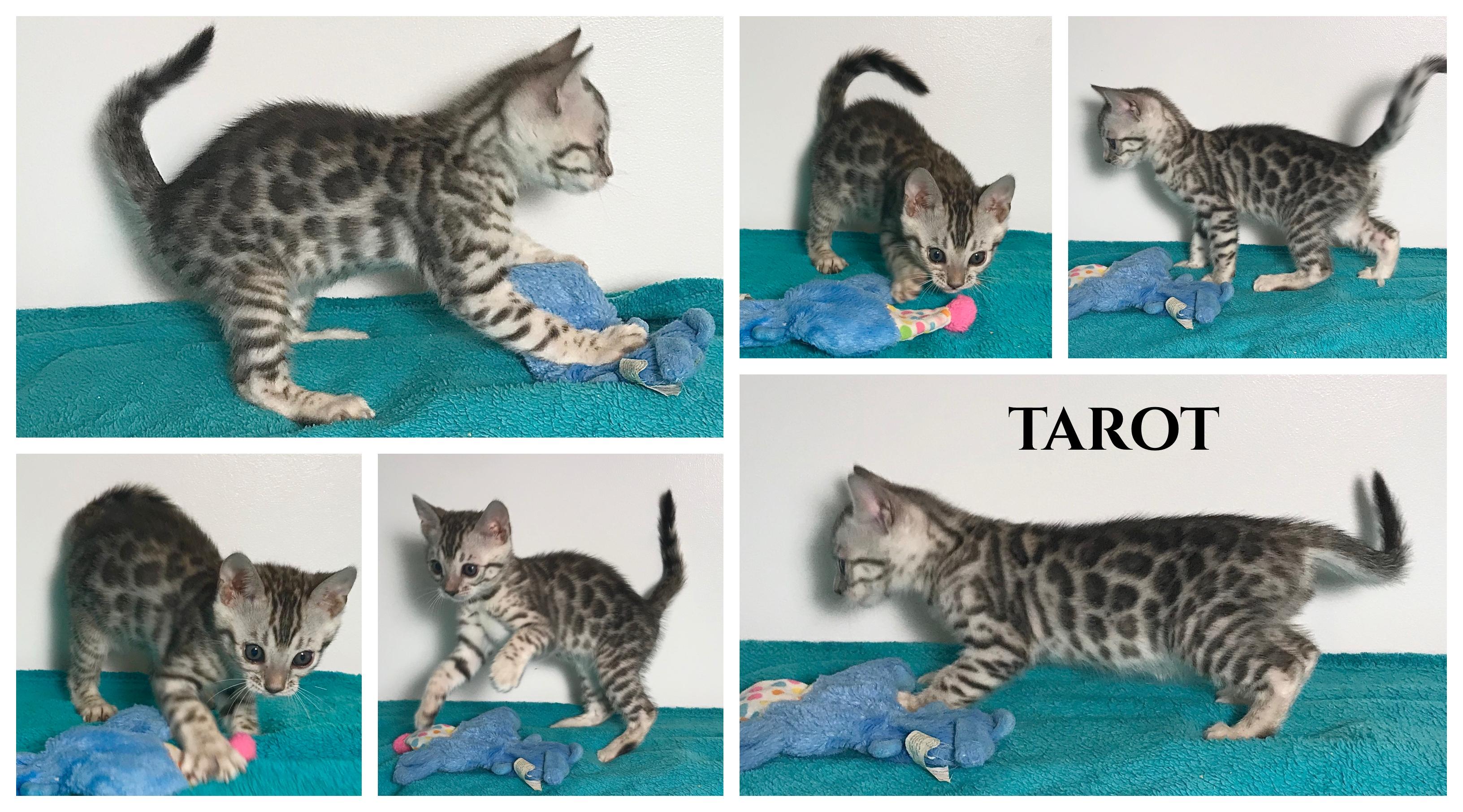 Tarot 7 weeks
