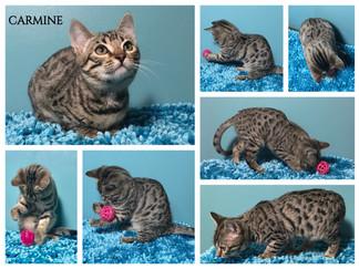 Carmine 13 weeks.jpg
