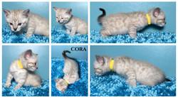 Cora 5 weeks