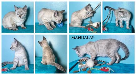 Mandalay 8 weeks.jpg