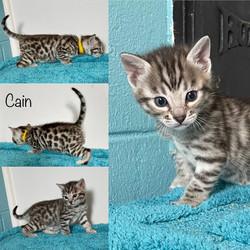 Cain 4 weeks