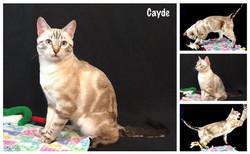 Cayde 20 weeks