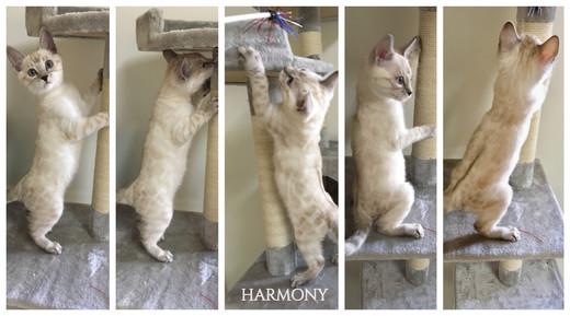 Harmony 10 weeks.jpg