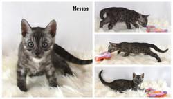 Nessus 7 weeks