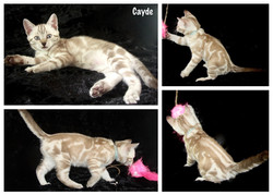 Cayde 8 weeks
