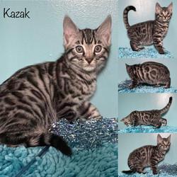 Kazak 9 weeks
