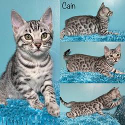 Cain 11 weeks